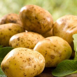 Latvijā ražots kartupelis